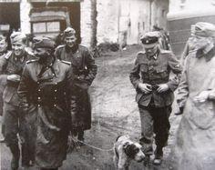 http://peiper.reibert.info/gallery/1940-1942/Jochen_Peiper_Sepp_Dietrich_drathaar_dog_Kurt_Meyer_rightmost_France_jun1940.jpg