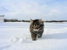 Gatto della neve