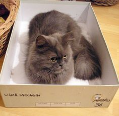 Cat in a Box -- Mopsy's maternity box