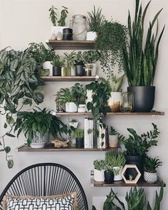 Top cheap vertical wall planter pots ideas to make your home interior healthy 4 ways to use eggshells for your plants Easy House Plants, House Plants Decor, Home Interior, Interior Design, Design Interiors, Interior Decorating, Decorating Ideas, Vertical Wall Planters, Grey Wood Floors