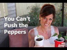 I made a mistake with my first batch of pepper plants - and you just can't push the peppers! Don't make the same mistake I did! Tips on how to do it right too!