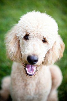 "So cute""Luca"" | Flickr - Photo Sharing!"
