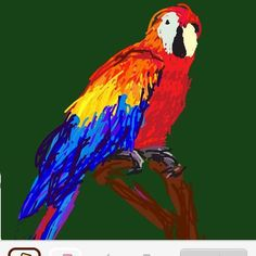#DrawSomething #parrot #bird by mixxie67 http://www.australiaunwrapped.com/