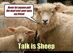 pulling the wool over someone's eyes | DON'T LET ANYONE PULL THE WOOL OVER YOUR EYES