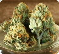 Image #The best seeds #http://www.spliffseeds.nl/silver-line/blue-berry-seeds.html