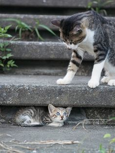 scolded kitty