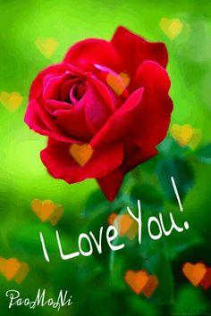 una rosa bella L Love You, Happy Sunday, Relationship, Bella, Plants, Flowers, I Love You, Te Quiero, Je T'aime