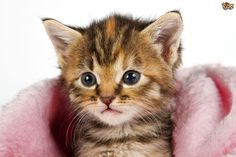 Photos de chats à télécharger gratuitement