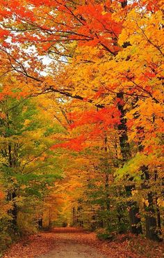 58 Ideas Beautiful Tree Autumn Walks For 2019 Fall Pictures, Fall Photos, Nature Pictures, Imagen Natural, Autumn Walks, Autumn Scenes, Autumn Aesthetic, Autumn Photography, Autumn Art