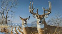 Deer Wallpaper 1920 X 1080 Animal Wallpapers