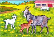 kozy Farm Animals, Animals And Pets, Goat Paintings, Story Sack, Kindergarten Fun, Stuffed Animal Patterns, Infant Activities, Easy Drawings, Painting Inspiration