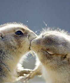 Amore mio baciami