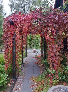 Gravel Garden, Garden Paths, Colorful Garden, Garden Planning, Garden Inspiration, Backyard Landscaping, Beautiful Gardens, Outdoor Gardens, Garden Design
