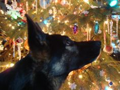 German Shepherd Christmas Silhouette