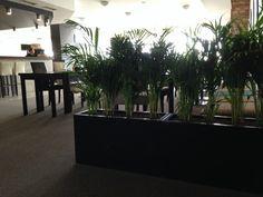 Tmavé truhlíky Plants, Plant, Planets