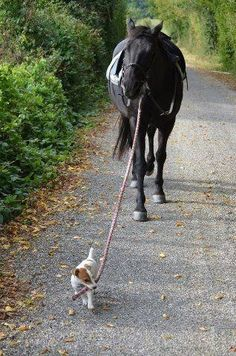 Little Dog says to The Horse whose named is: \Beaumont.\ \Will you walk a little faster please 'Beaumont?' We are already running late!\
