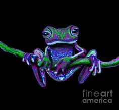 Purple Frog on a vine