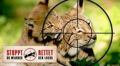Stoppt die Wilderer, rettet den Luchs!Bitte unterschreiben und teilen,Danke. Stop the poacher, save the lynx! Please sign & share,thanks. First Name,Last Name,Email ,ZIP and sign Now = >Jetzt Unterschreiben