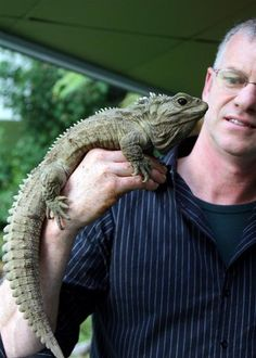 The Tuatara! Native to NZ this living fossil is the sole survivor of an order from 200 million years ago (more fun facts in comments) Fast Crazy Nature Deals. Living Fossil, Coin Values, Axolotl, Reptiles And Amphibians, Creature Design, New Zealand, Wildlife, Creatures, Pets