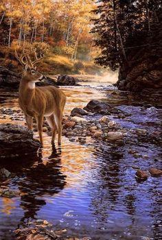 Deer in fall creek
