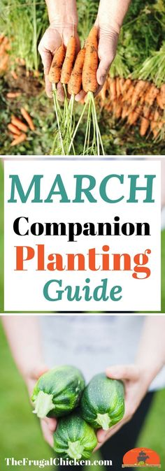 Itching to get your gardens started? Companion planting will yield a better harvest! Here's 8 vegetables that grow well together!