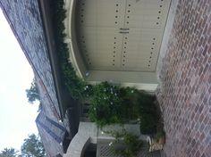 Climbing vines over a garage door