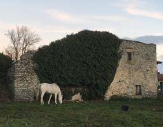 Practicando turismo rural por la Llanada alavesa te puedes encontrar de repente con imágenes tan auténticas como ésta. ¿Te animas a visitarnos?  Agroturismo Arkaia, en Vitoria-Gasteiz. http://agroturismoarkaia.com/index.php/es/