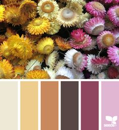 Explore Design Seeds color palettes by collection. Hue Color, Colour Pallette, Colour Schemes, Color Combos, Color Balance, Design Seeds, Coordinating Colors, Color Theory, Color Inspiration