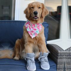Two of our favorite things: new Skechers and Sundae The Golden.