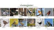 Fugleplakat-header
