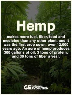Cbd Oil Benefits learn how cbd oil can benefit you and your life cbd oil has so many health benefits in so many ways such as diabetes, migraines arthritis , panick attacks, weight loss anxiety and Oil Benefits, Health Benefits, Health Tips, Endocannabinoid System, Hemp Seeds, Hemp Oil, Medical Marijuana, Marijuana Facts, Good To Know