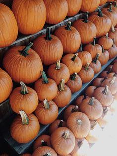 Pumpkins upon pumpkins