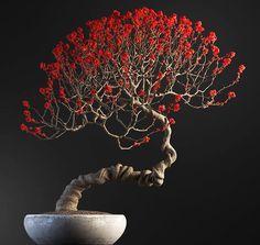 Flowering Bonsai Tree, Japanese Bonsai Tree, Bonsai Trees For Sale, Bonsai Tree Care, Bonsai Tree Types, Bonsai Plants, Bonsai Garden, Succulents Garden, Cactus Plants