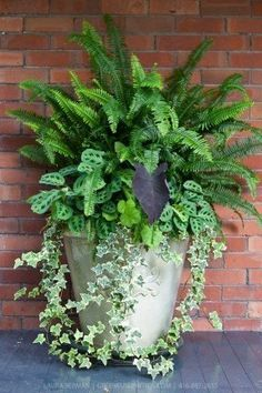 Ivy, ferns and other tropical plants in a tall white stone pot against a red brick wall. Ivy, ferns and other tropical plants in a tall white stone pot against a red brick wall. Container Flowers, Flower Planters, Container Plants, Garden Planters, Container Gardening, Flower Pots, Ferns Garden, Plant Containers, Fern Planters