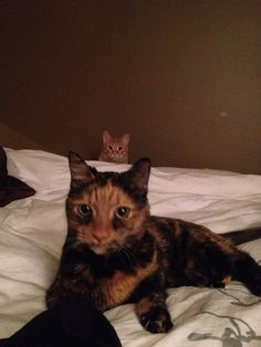 """Playing with one.then saw the other pop up  *kitty in back saying """"soon""""*"""