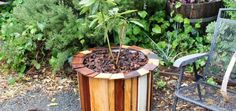 Stylish and Low Cost 55 Gallon Drum Planters : Mulch and your done
