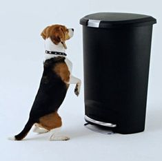 49 Best Dog Proof Trash Cans Animal Proof Garbage Cans Images In