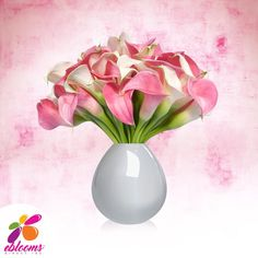 baby Mini Callas White and Pink Pack 80 Stems- EbloomsDirect Types Of Flowers, Cut Flowers, Fresh Flowers, Calla Lily Flowers, Bridal Flowers, Calla Lilies, Bulk Flowers Online, Fifty Flowers, Flowers Delivered