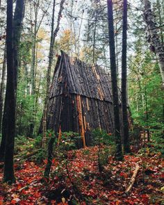 Cabin in the woods by punkodelish