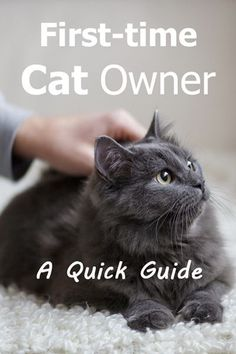 Apr 2018 - First Time Cat Owner Guide: Wondering what having a cat is like? Read this before you adopt to get a better sense of what cats are like and what you'll need to do as a cat owner. Adoption Chat, First Time Cat Owner, Getting A Kitten, What Cat, Cat Care Tips, Dog Care, Pet Tips, Kitten Care, Adopt A Kitten