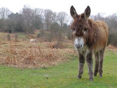 donkey, radio, forest