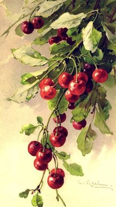 water colored cherries