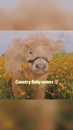 Country Baby names 🍄