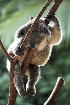 Just hanging around at Currumbin Wildlife Sanctuary, Gold Coast