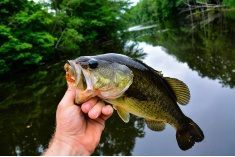 Fishing Tips For Bass - Bass Fishing Essentials - http://bassfishingmaniacs.com/fishing-tips-for-bass-bass-fishing-essentials/