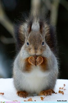 squirrel!! her/his paws form a heart!