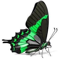 Resultado de imagen para mariposas transparentes animadas