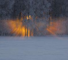 Looks like this #Swedish tree has a halo, via Flickr. skandinavisk.com