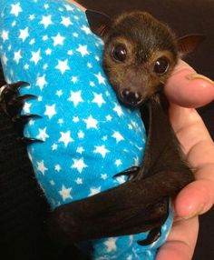 Beautiful bat - I wish I could have them as pets!