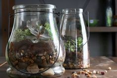 How to Make a Terrarium Plus tips on making it educational for kids